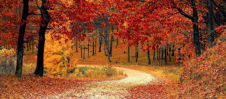 fall-autumn-red-season helpbevbeatcancer.com